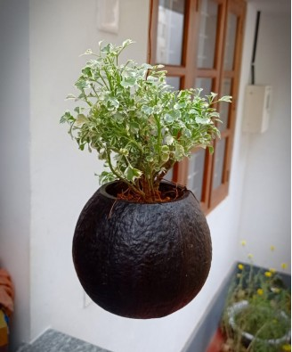Eco-Friendly Beautiful Flower Hanging Pot Brass Broidered Coconut Shell Crafts Of Kerala Set of 2