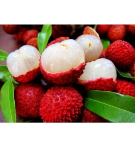 Fresh Pulpy Sweet Shahi Litchi of Bihar (1kg)