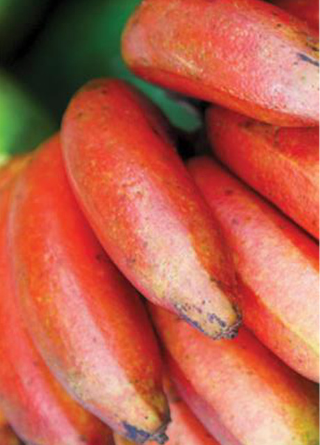 KAMALAPUR RED BANANA